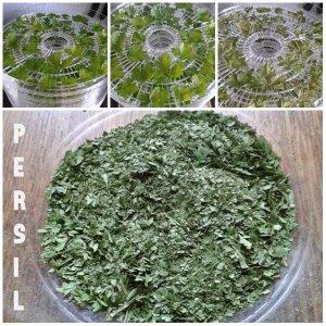 persil 2h